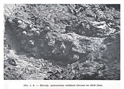 Трупы, систематически уложенные головой к стене ямы.