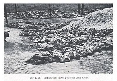 Эксгумированные трупы, уложенные возле могил.